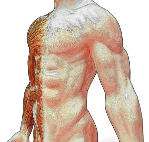 anatomy-1428238-639x609